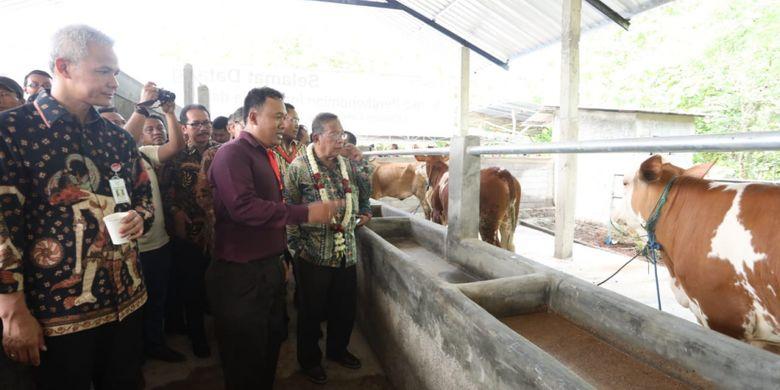 Menko Perekonomian Darmin Nasution bersama Gubernur Jawa Tengah Ganjar Pranowo saat peluncuran KUR khusus peternakan rakyat di Desa Kebonagung Kabupaten Wonogiri, Kamis (6/12/2018).