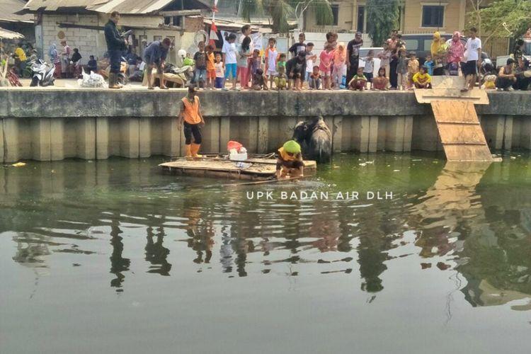 Sejumlah petugas berupaya mengevakuasi sapi yang tercebur di Kali Angke, Selasa (21/8/2018).