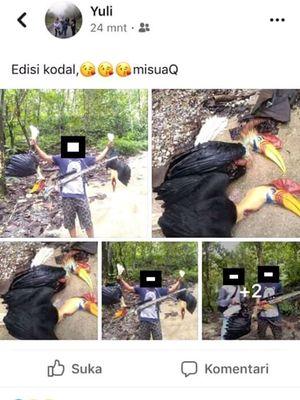 Screen shoot facebook yang memperlihatkan dua burung Julang Sulawesi yang mati akibat Perburuan Liar di Kolonodale, Morowali Utara Sulawesi Tengah.
