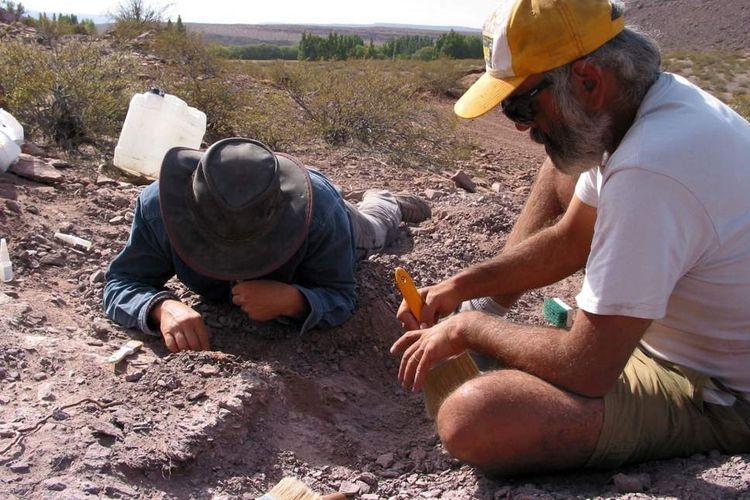 Para ahli menemukan spesies baru dinosaurus di Argentina