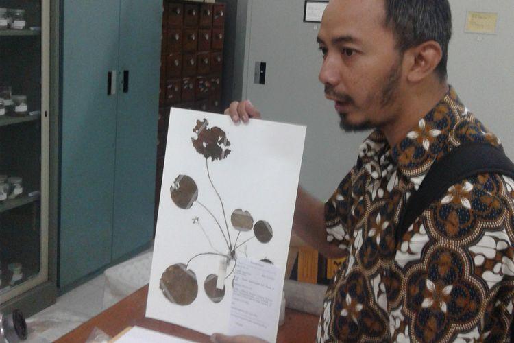 Penjelasan mengenai koleksi awetan kering spesies baru Begonia oleh peneliti Pusat Penelitian Konservasi Tumbuhan dan Kebun Raya LIPI, Wisnu Aji Handoyo.