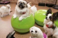 3 Kafe di Jepang Ini Dipenuhi Anjing-anjing Lucu!
