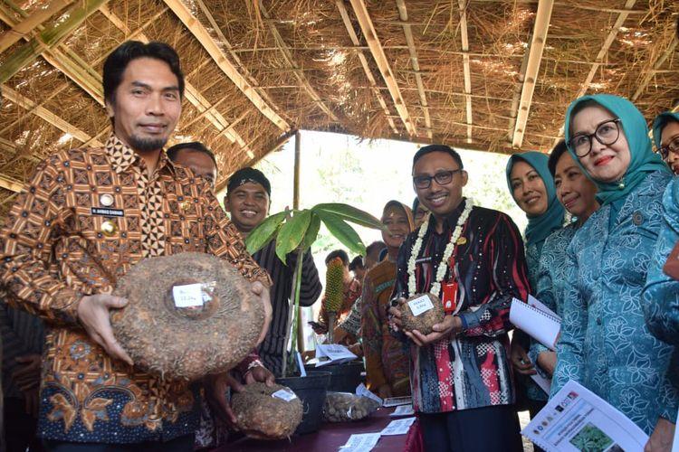 Bupati Madiun, Ahmad Dawami menunjukkan umbi porang yang menjadi andalan petani Desa Kepel, Kecamatan Kare, Kabupaten Madiun. Dari bertanam porang, satu hektar warga bisa meraih Rp 110 juta.