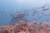 Menyelami Keindahan Bawah Laut Tanjung Waka, Maluku Utara