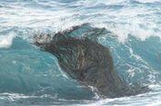 Berkat Rumput Laut Ini, Antartika Tak Lagi jadi Benua Terisolasi