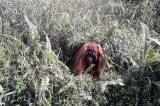 Berdamai dalam Konflik Orangutan