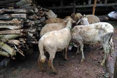 Bantuan Pertanian Bakal Kurangi Angka Kemiskinan di Desa