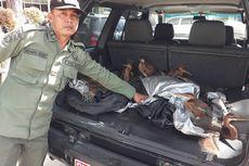 BBKSDA Riau Amankan 32 Ekor Burung Cangak Merah Dilindungi