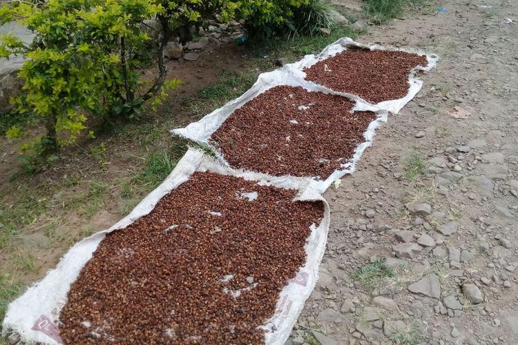Kopi arabika di kecamatan Gunung Halu yang dijemur masyarakat setempat. Kopi ini disebut memiliki grade A.