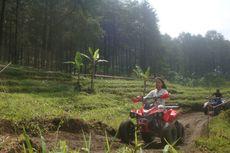 Wisata Hutan Pinus dan Kisah Warga Lereng Gunung Slamet Keluar dari Jerat Kemiskinan