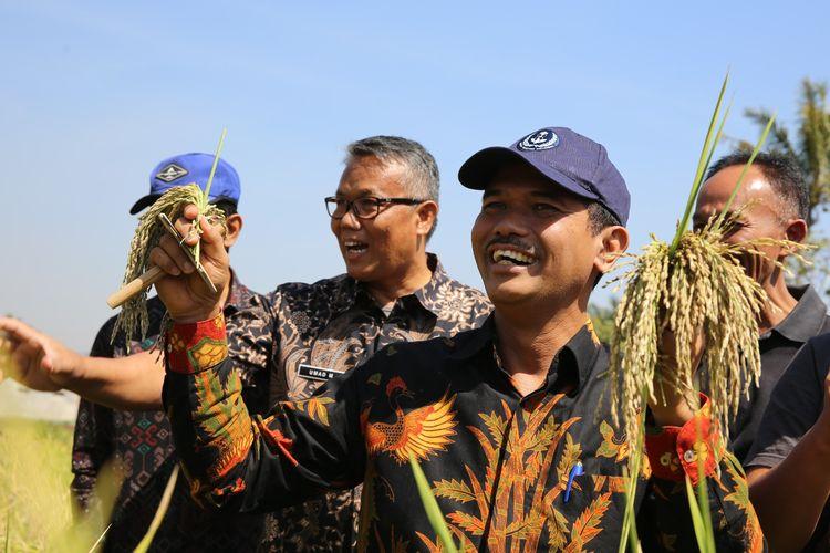 Eskportir: Pangsa Pasar Ekspor Ketan Hitam Indonesia Terbuka Lebar