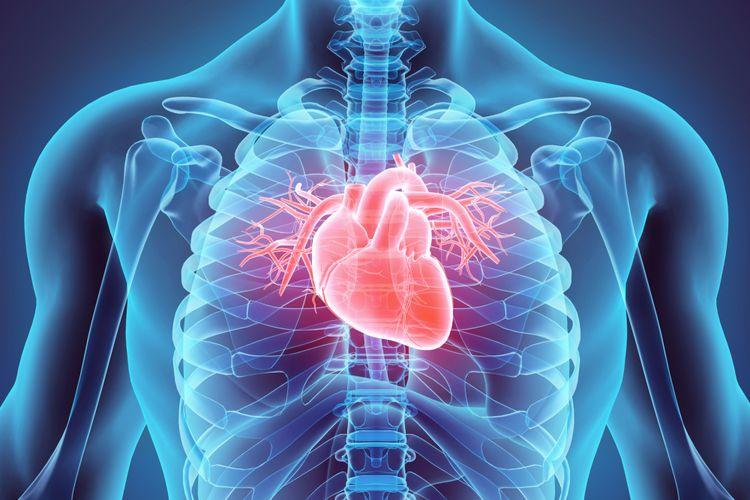 Hasil gambar untuk jantung