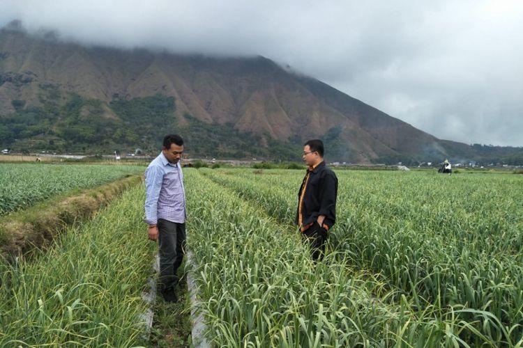 Wilayah Sembalun, Lombok Timur akan dijadikan sentra terbesar bawang putih Indonesia