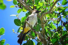 Spesies Burung di Inggris Ini Buktikan Adanya Evolusi