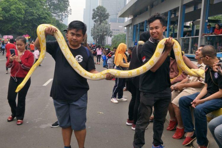Ular sanca dengan panjang sekitar 3 meter dipamerkan di Jalan MH Thamrin tepatnya di depan Sarinah, Jakarta Pusat, Minggu (9/12/2018).