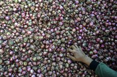 Mentan Lepas Ekspor Bawang Merah Brebes Ke Thailand