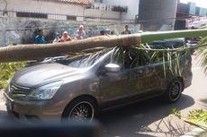 Mobil Tertimpa Pohon Tumbang, Pria ini Berencana Lapor Polisi