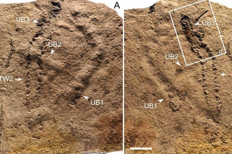 Jejak Kaki Tertua di Dunia