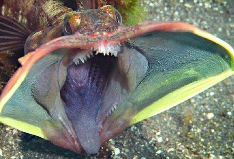 Inilah Ikan yang Disebut 'Sangat Jelek' dalam Literatur Ilmiah