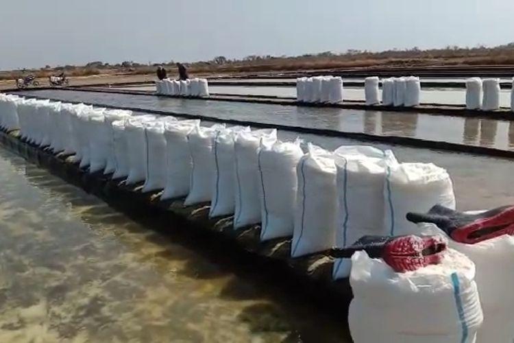 Sejumlah petani garam lokal di Pantura Brebes, Jawa Tengah sedang panen garam di tengah anjloknya harga garam.