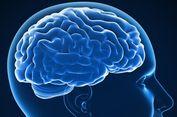 Studi Awal Tunjukkan Status Sosial Pengaruhi Struktur Otak Manusia