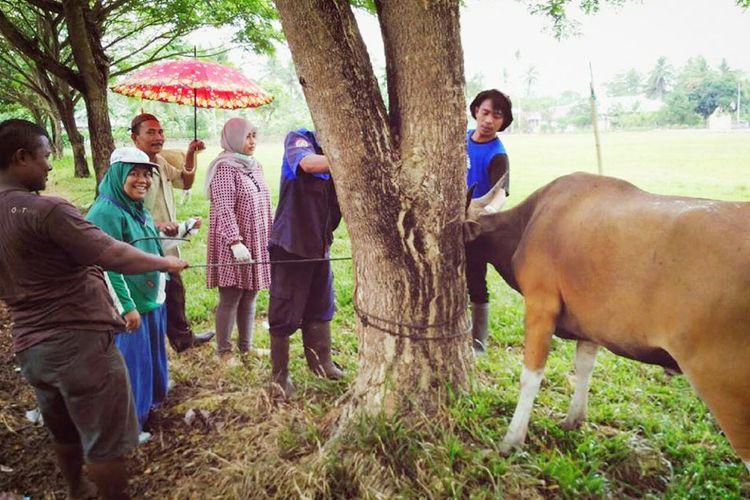 Pemeriksaan sapi di Kabupaten Gorontalo
