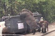 Keluarga Babi Hutan Terekam Kamera Berkeliaran di Dekat Sekolah