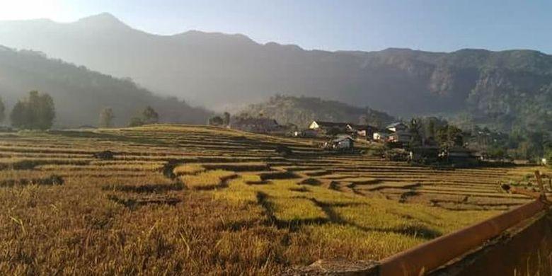 Hamparan persawahan di Lembah Ranggu dengan latar belakang Poso Kuwuh, Kecamatan Kuwus, Kabupaten Manggarai Barat, NTT.