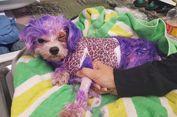 Anjing Alami Luka Bakar Usai Dicat Bulunya, Ini Pelajaran untuk Kita