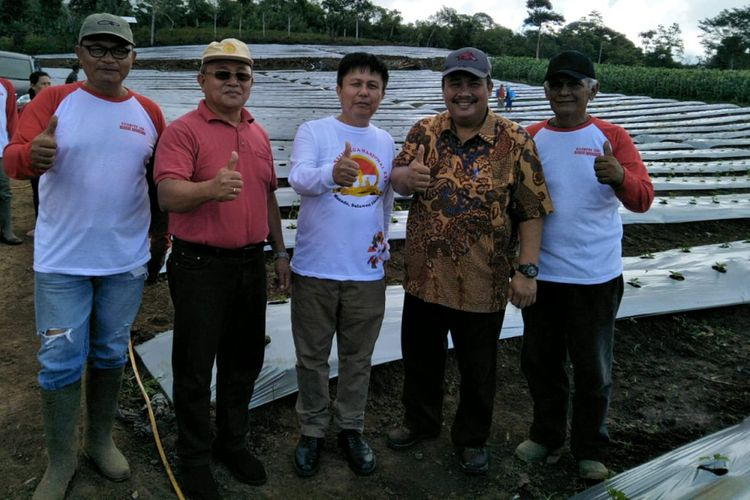 Pertanian bawang putih di Minahasa, Sulawesi Utara