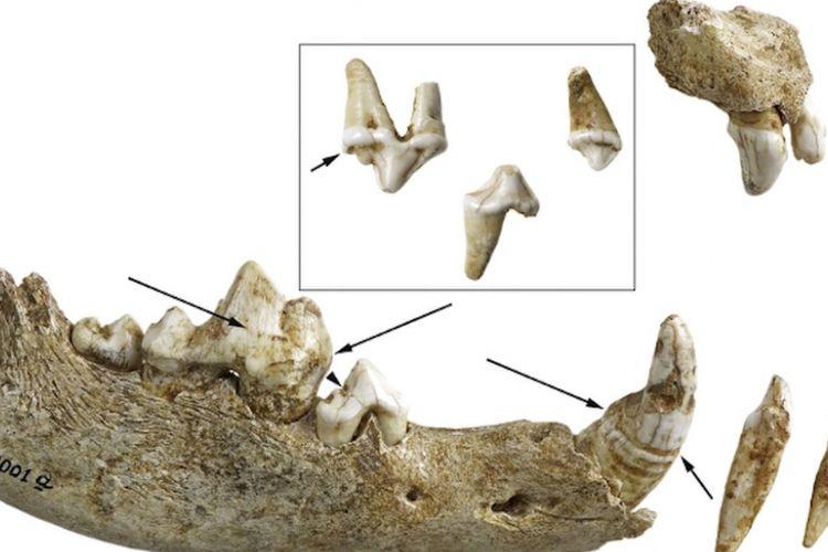 tulang anjing purba