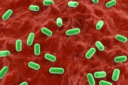 Sering Dianggap Buruk, Bakteri Sebetulnya Juga Dibutuhkan oleh Tubuh