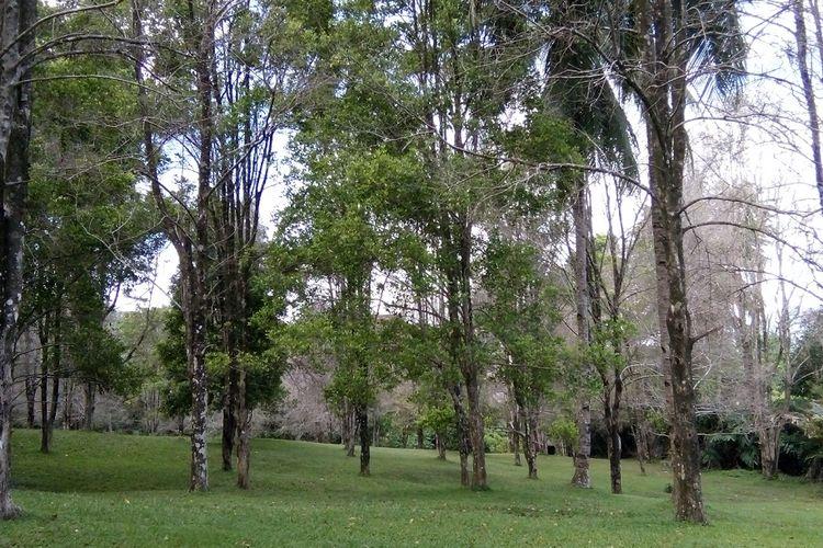 Hijaunya Kebun Cengkeh Gambesi, Ternate.