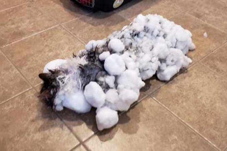 Inilah Fluffy yang difoto pada 31 Januari 2019. Tubuhnya diselimuti es beku karena suhu ekstrem Polar Vortex.