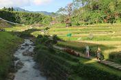 Seru! Hotel Ini Tawarkan Main di Sawah hingga Berkuda di Sisi Sungai