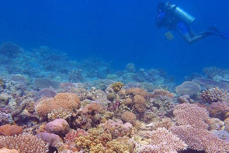 View salah satu spot diving di Taka Bajang Pogo, Taman Nasional Taka Bonerate