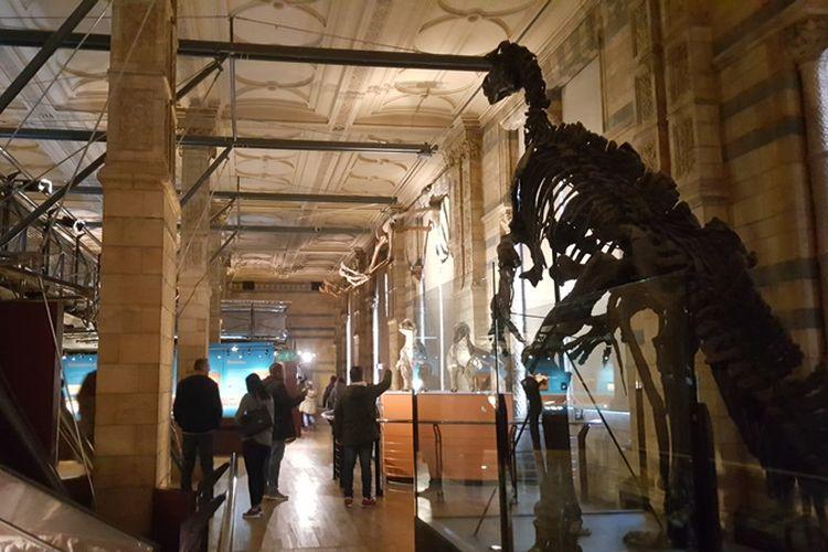 Suasana di Dinosaurs Hall di Natural History Museum di London, Senin (6/11/2017). Di tempat ini tersimpan berbagai fosil maupun replikanya dari berbagai jenis dinosaurus yang pernah ditemukan.