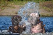 Botswana Diprediksi jadi Tempat Bulan Madu Harry dan Meghan