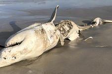 Studi Ungkap Hewan Laut yang Ditakuti Hiu