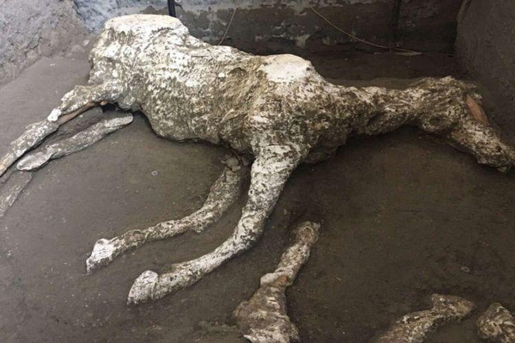 Fosil kuda yag ditemukan di Pompeii