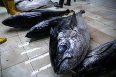 Anak Buah Susi Ungkap Penyelundupan 28,8 Ton Tetelan Tuna Asal Vietnam