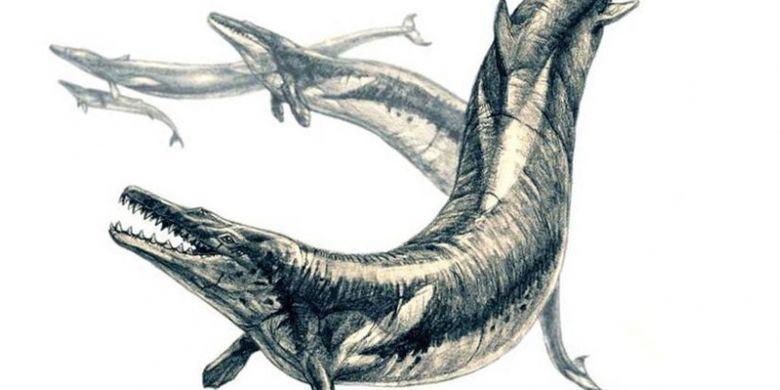 Ilustrasi paus purba Basilosaurus isis yang hidup 35 juta tahun lalu.