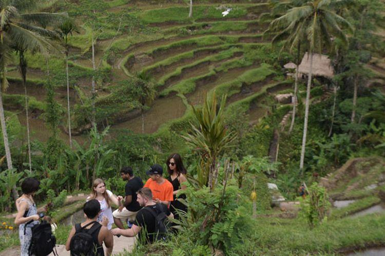 Wisatawan mancanegara menikmati pemandangan pedesaan sawah berundak (terasering) di Desa Tegallalang, Gianyar, Bali, Rabu (30/1/2019). Dinas Pariwisata Daerah Kabupaten Gianyar menargetkan kunjungan sebanyak tiga juta orang wisatawan mancanegara ke Gianyar selama tahun 2019.