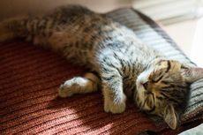 Kisah tentang Keluarga Anies Kehilangan Kucing Peliharaan Mereka