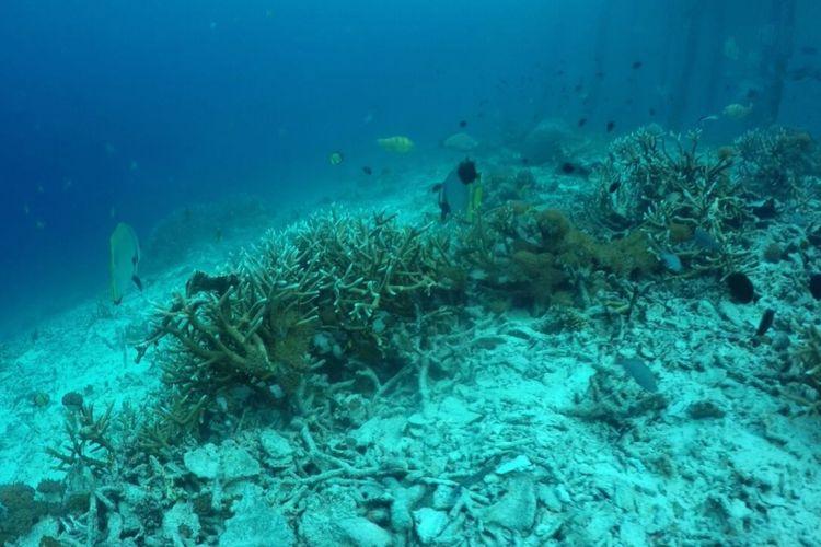 Beberapa bagian di salah satu dive spot favorit Raja Ampat, yaitu perairan Pulau Arborek yang mengalami beberapa kerusakan karang, Kamis (19/10/2017).