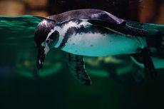 Ngabuburit Sambil Melihat Penguin di Ocean Dream Samudra Ancol