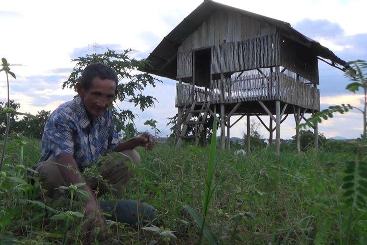 Kiat Subarkat Mendulang Rupiah dengan Berkebun di Tanah Orang