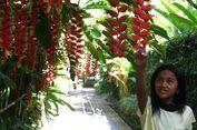 Juada Garden, Vila Asri dan Tersembunyi di Seminyak