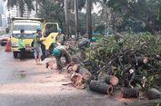 6 Jalan di Depok Ini Rawan Pohon Tumbang