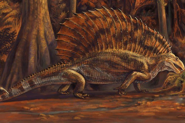 Mirip dinosaurus, reptil tertua ini sebenarnya sepupu jauh hewan herbivora modern. Gordodon kraineri hidup 300 juta tahun yang lalu, jauh sebelum dinosaurus ada.